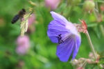 Flower and Bee 2