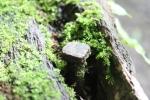 Moss and Nail